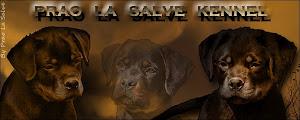 PRAO LA SALVE KENNEL