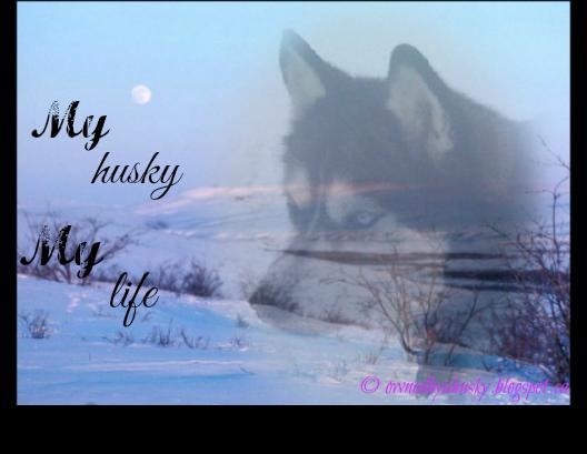 husky graphics