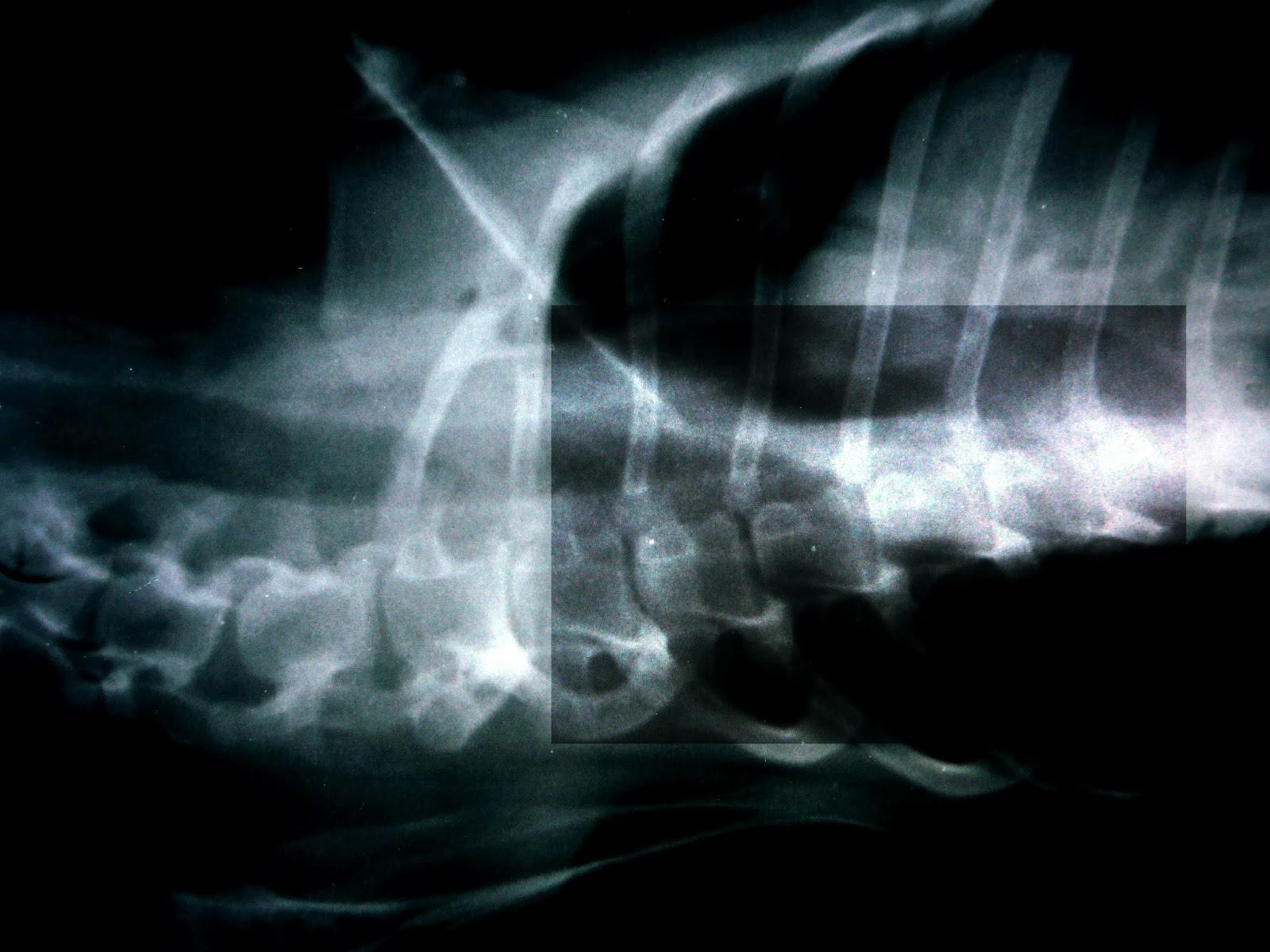 diagnostico radiologico