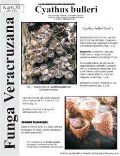 Cyathus bulleri (Fungi: Basidiomycetes: Nidulariales