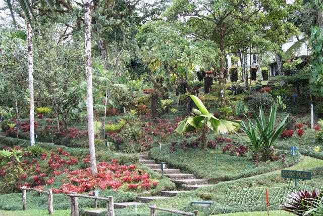 Blog personal jardin botanico wilson for Jardin wilson