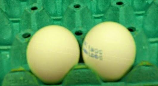 البيض الطازج, ثقافة وادب, البيض,