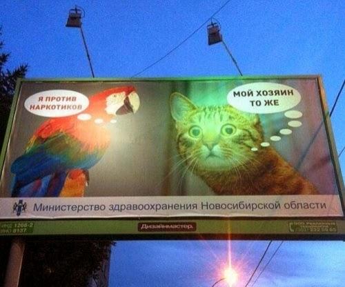 Неграмотные звери-наркоманы в Новосибирске.
