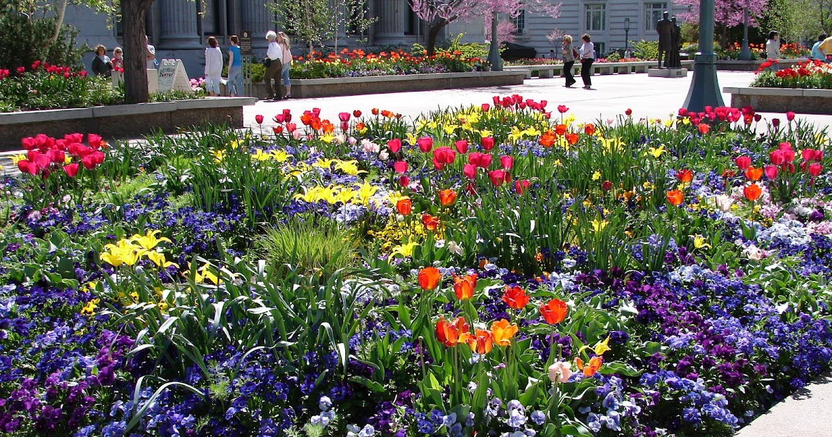 New Utah Gardener Spring Bulbs Are Great For A Waterwise