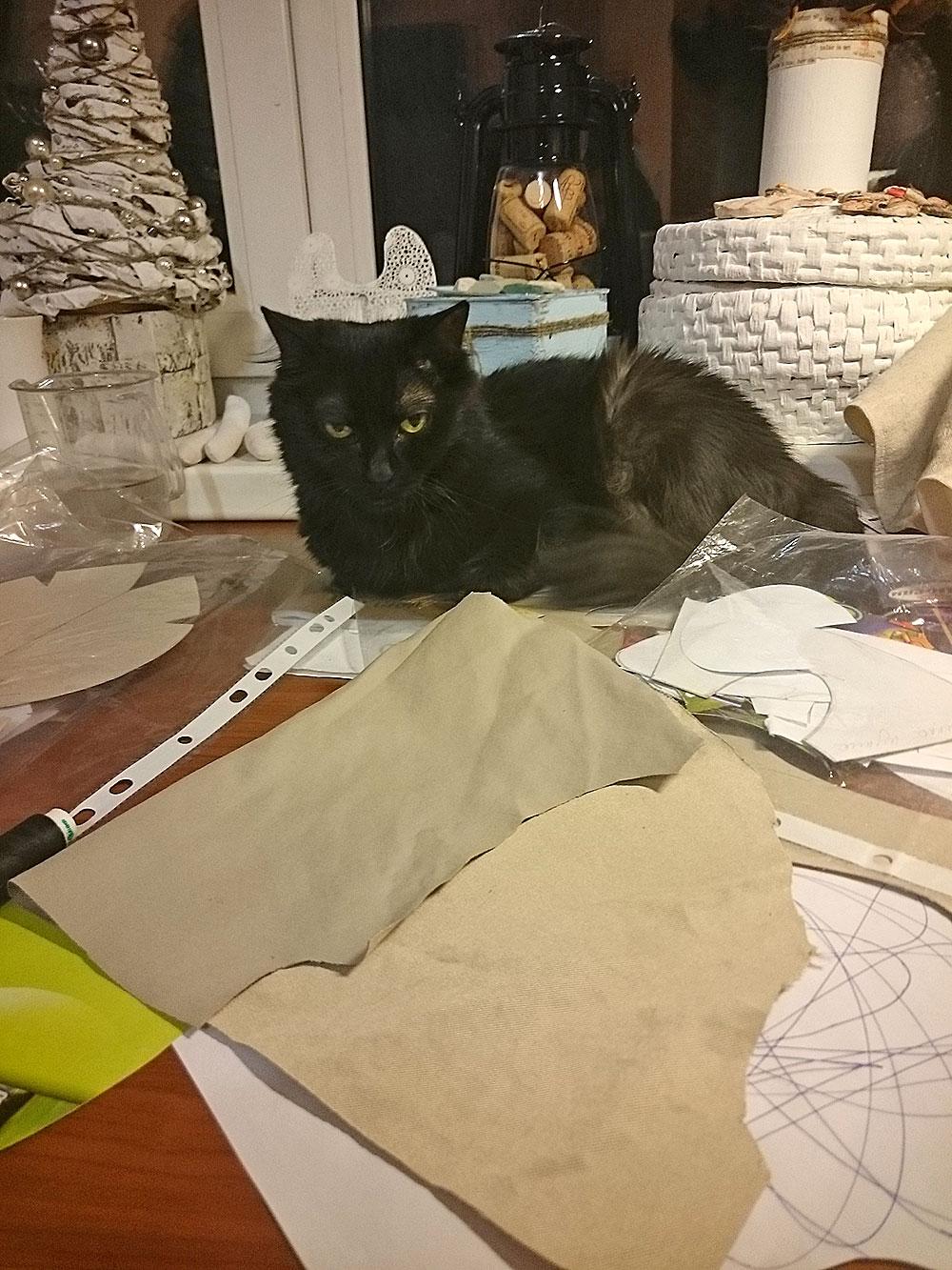 кошка, кот, котэ, животное, домашнее животное