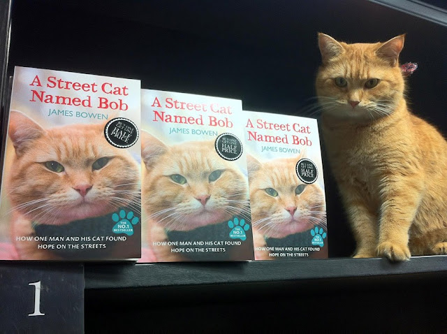 El gato que le cambió la vida