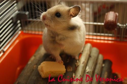 La Cuisine De Veronica, V女廚房, 倉鼠, 黃金倉鼠, Syrian Hamster, Hamster, 熊仔鼠