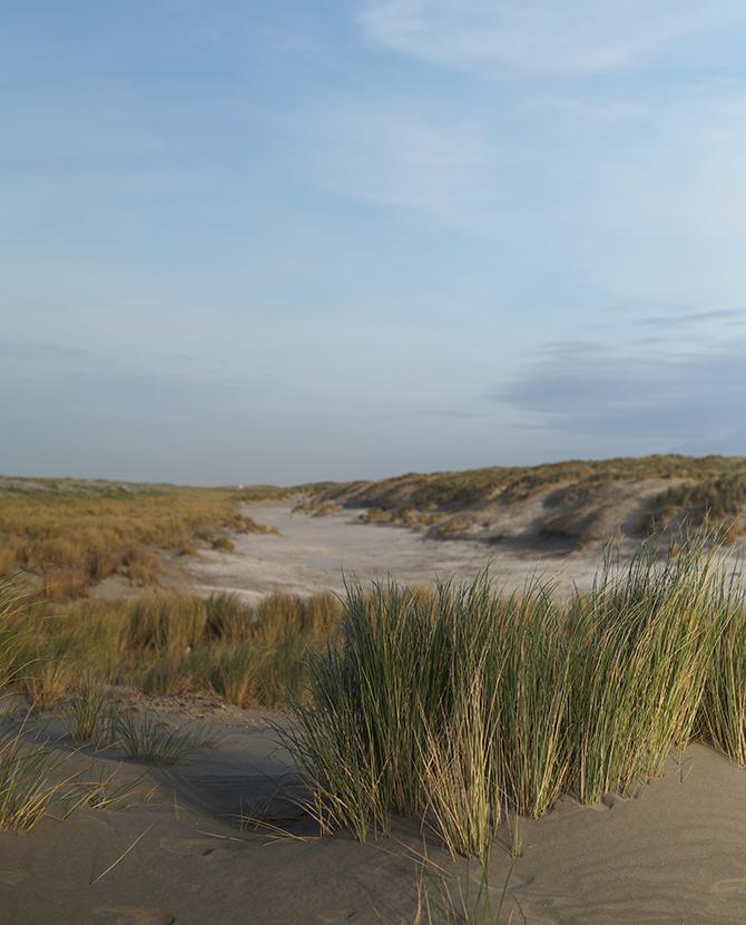 Duinen bij Hoek van Holland