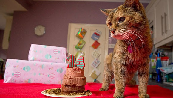 You Won't Believe How Old The World's Oldest Cat Is