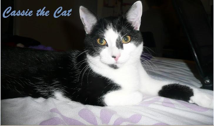 Cassie the Cat
