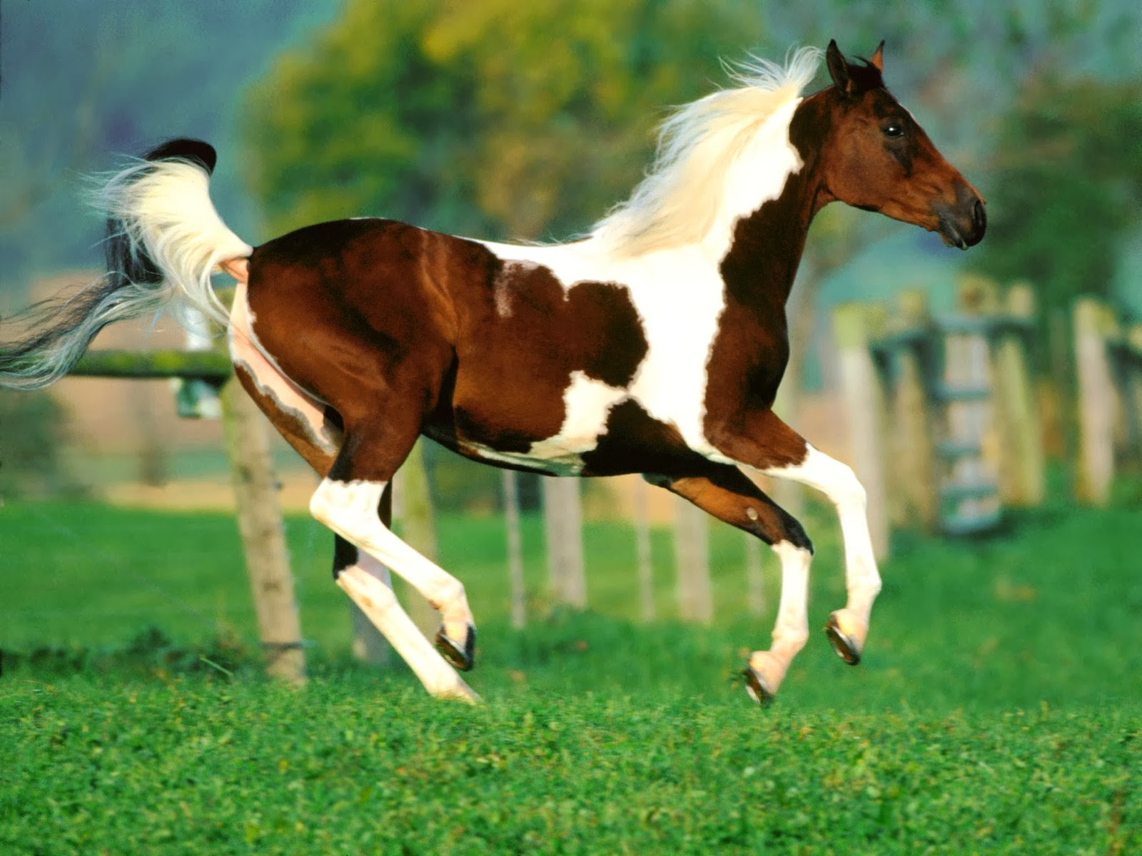 Horse Wallpapers Hdhorses Pictures For FacebookBlack Horseswhite Horses Red PicturesBeautiful Horseshorse In Water
