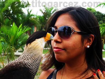 No momento de interação, Gavião Carcará lida tranquilamente com visitante do Parque dos Falcões, em Sergipe
