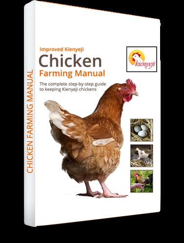 Order Your Kienyeji Chicken Manual Now!!