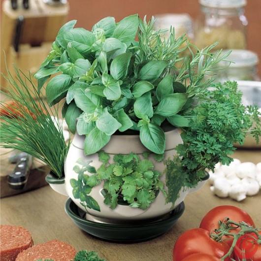 Fantasie di pannolenci piante aromatiche - Coltivare piante aromatiche in casa ...