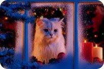 I ❤ Cats ^^