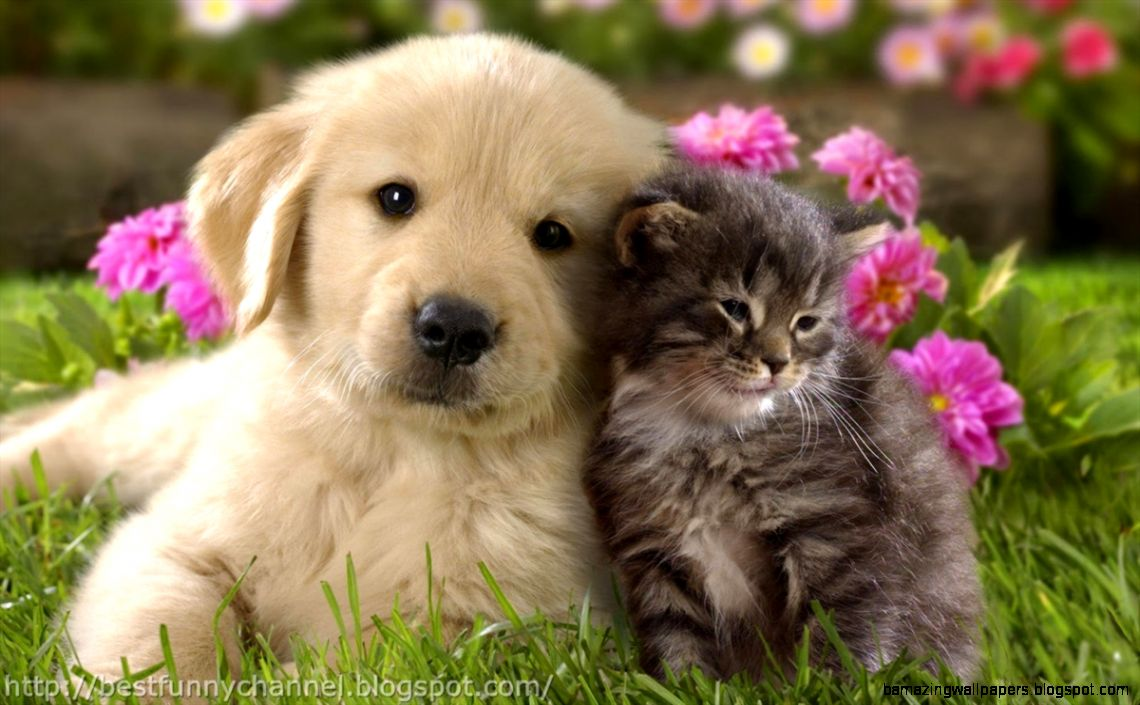 Cute Kittens And Puppies Kissing Wallpaper Cats Wallpaper Hd