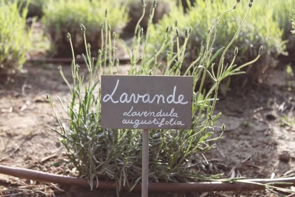 Lavender at Mas de l'Oulivié in Provence