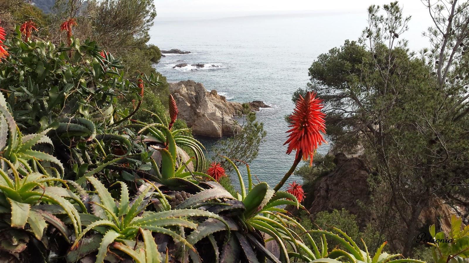 Patroniokayak: Jardines de Santa Clotilde. Lloret de Mar.