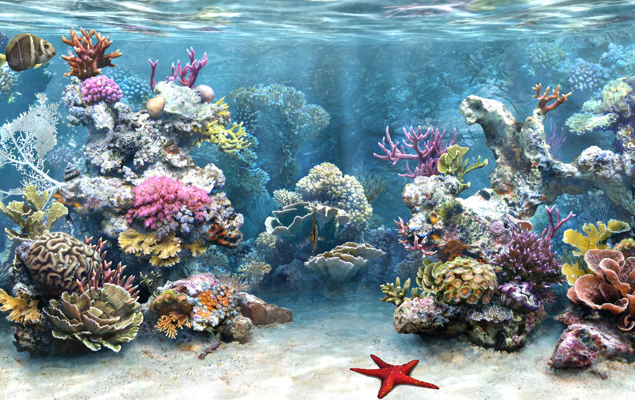 Download full hd 3d aquarium wallpapers for Reef tank fish