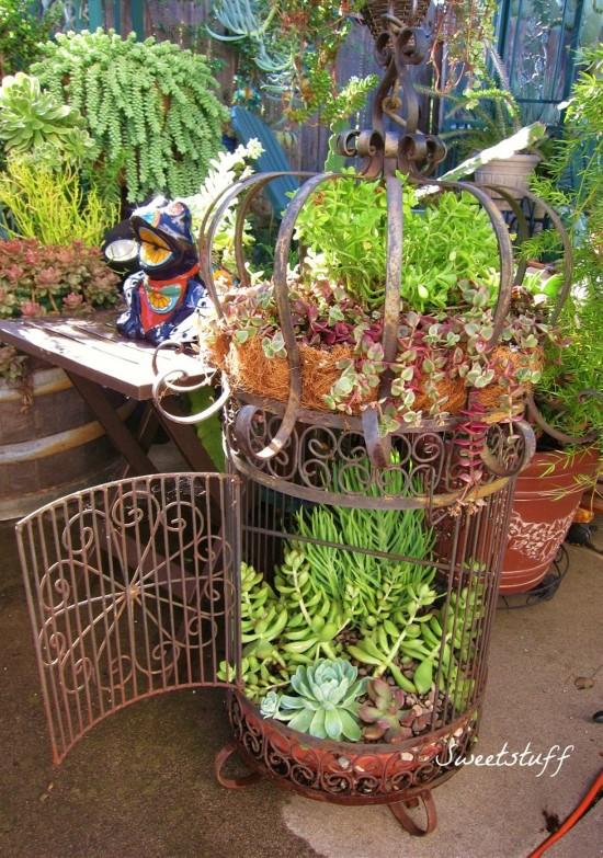 Container Garden Artisan: Candice U0027Sweetstuffu0027 Suter