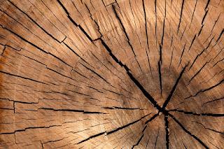 Opportunità per la filiera del legno e delle foreste