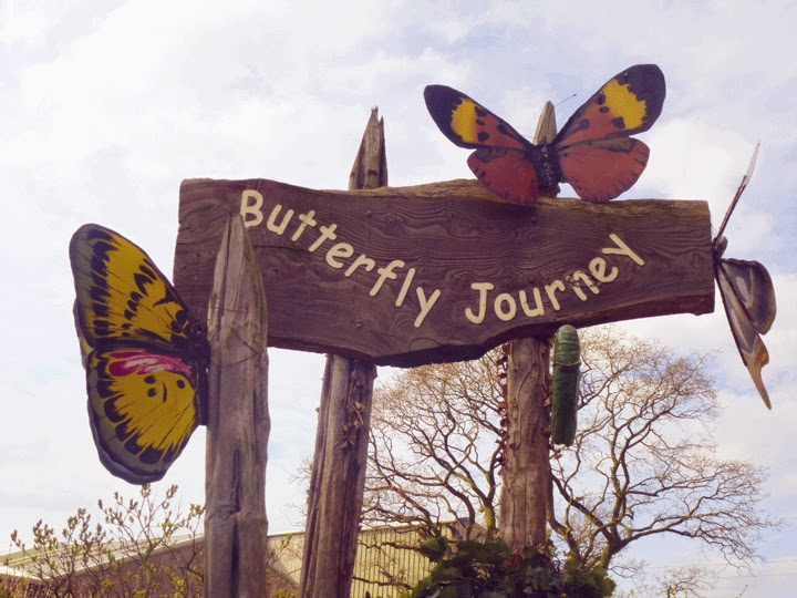 butterfly journeyChester Zoo