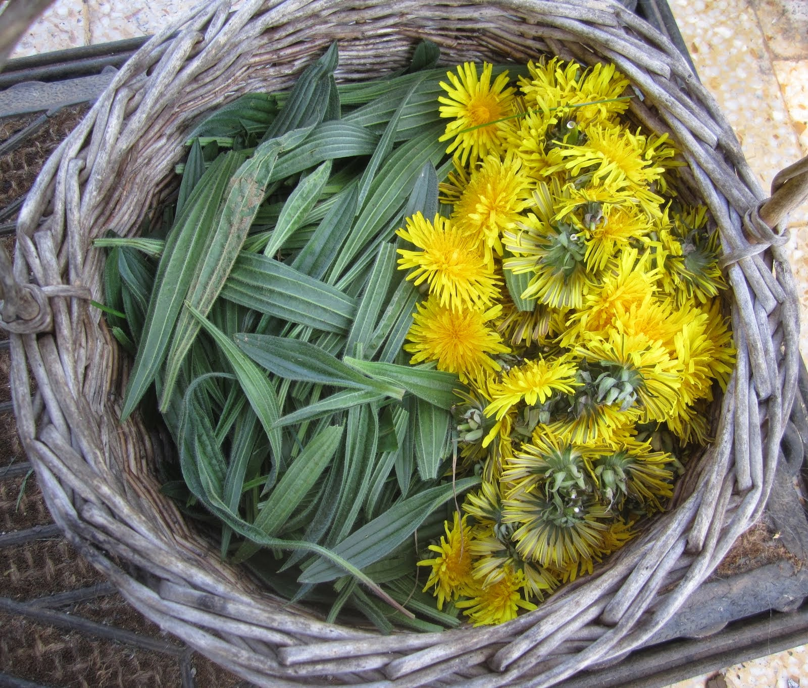Plantain and dandelion flowers