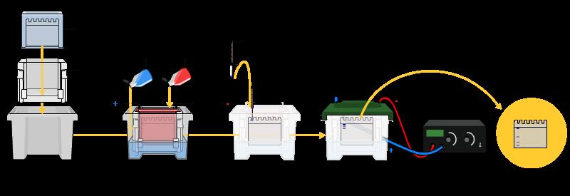 Técnicas de búsqueda de ácidos nucleicos y proteínas   Apuntes de ...