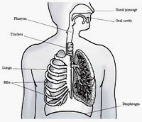Bed learning resources macro lesson plan on human respiratory draw diagram of human respiratory system ccuart Choice Image