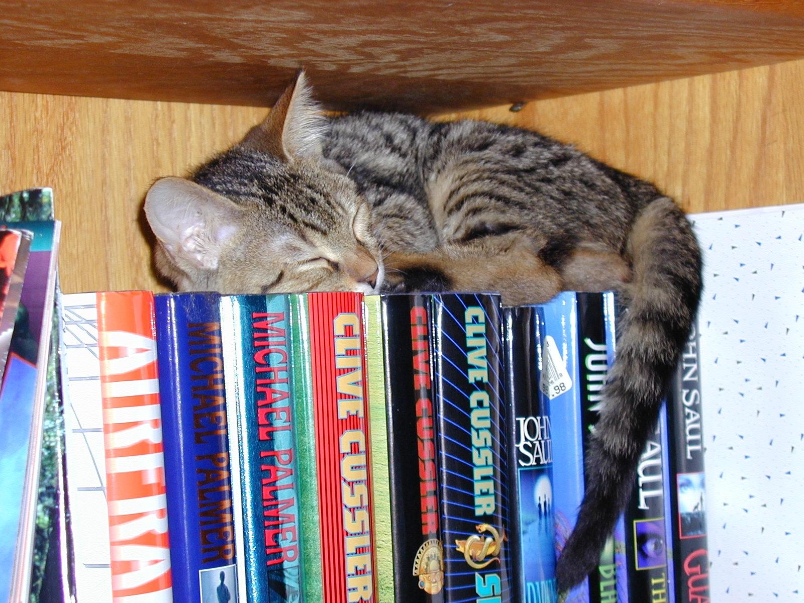 http://3.bp.blogspot.com/-9PaEnOWxGhM/TfTz0LtFM0I/AAAAAAAADT8/FsfhQy5u8Io/s1600/hd-cat-books-wallpaper.jpg