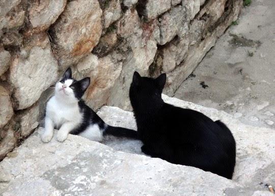 cats of dubrovnik croatia