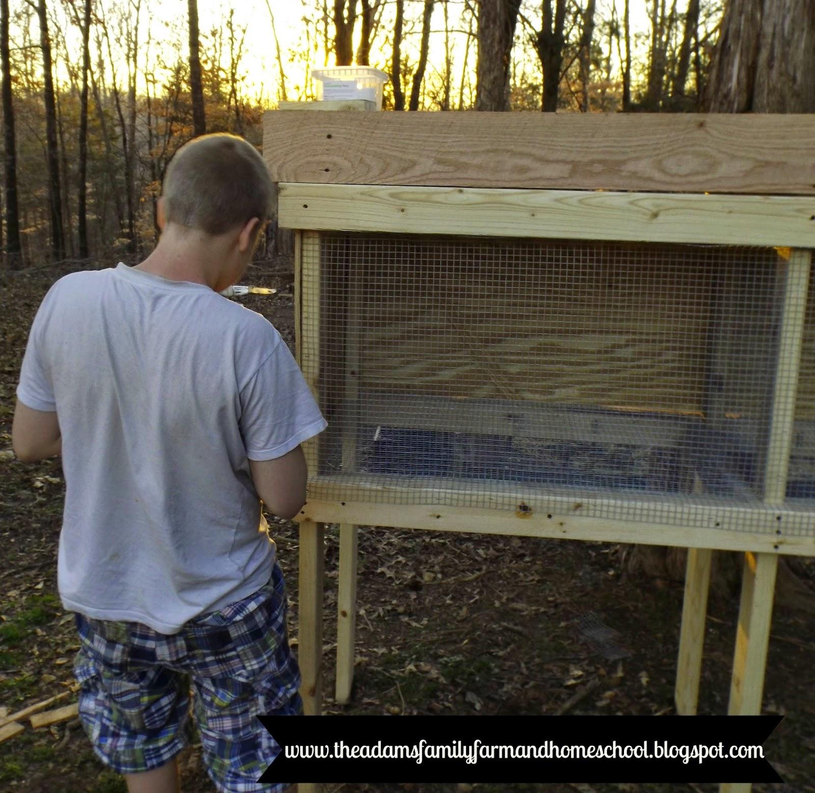 CJ Adding Hardware Cloth to Rabbit Cage