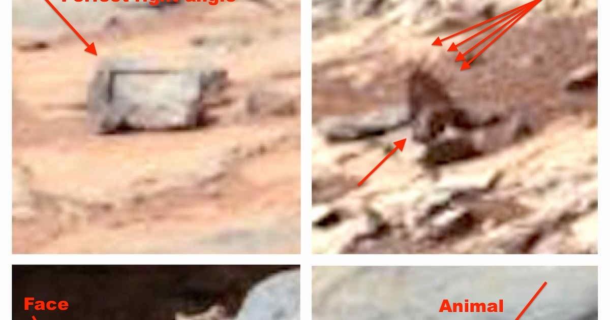 tiny creature nasa found - photo #24