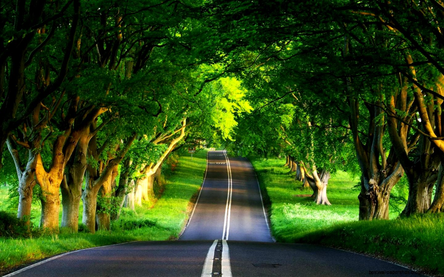 Download Cool Beautiful Nature Road Wallpaper  Full HD Wallpapers
