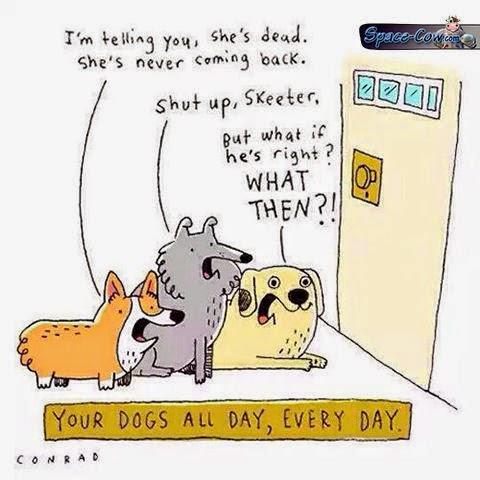 funny animals dogs comics