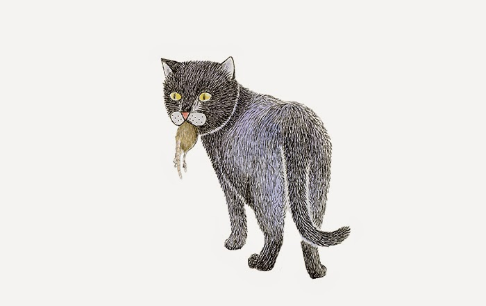 midnight the black cat yara dutra