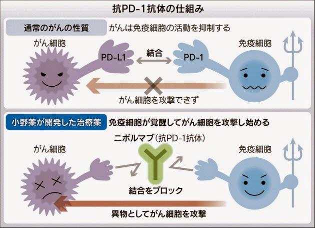 抗PD-1抗体 仕組み