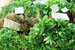 Hay que tener cuidado con las plantas y el cáncer