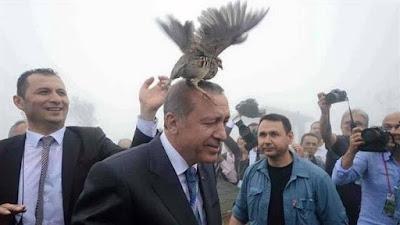 Birds over the head of Erdogan