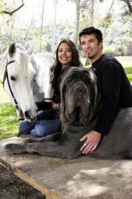 Largest Dog In The World Hercules Topix