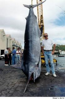 ikan laut raksasa