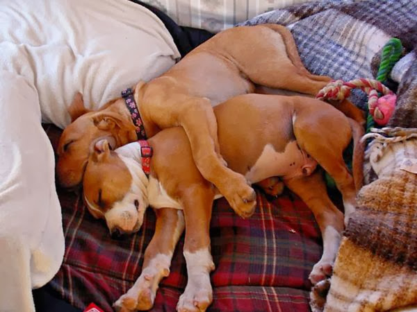 dogs sleeping together, dogs hugging