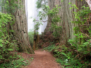 National Parks Services to keep Del Norte Coast Redwoods State Park open