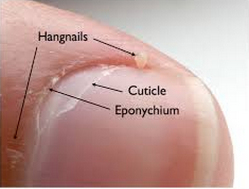 VBP International: Eponychium VS Cuticle