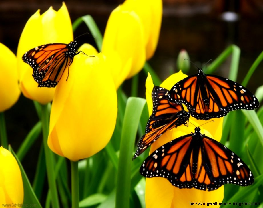 Beautiful Spring Flowers And Butterflies  Download Thousands of