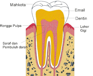 bagian gigi, mulut