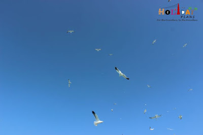Flock of beautiful white birds on the way to Beyt Island