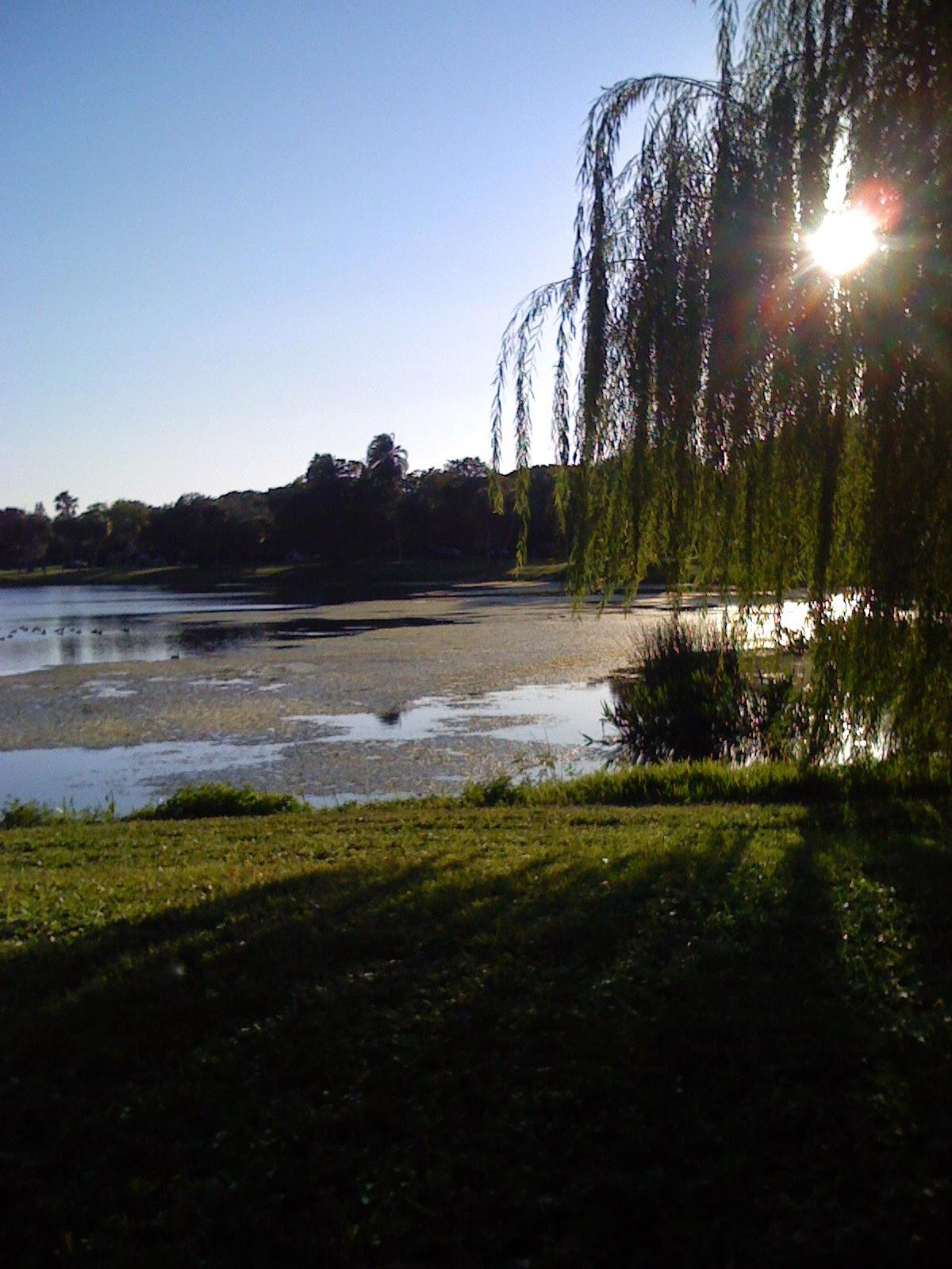 lake view, lake sunset, park, St Petersburg