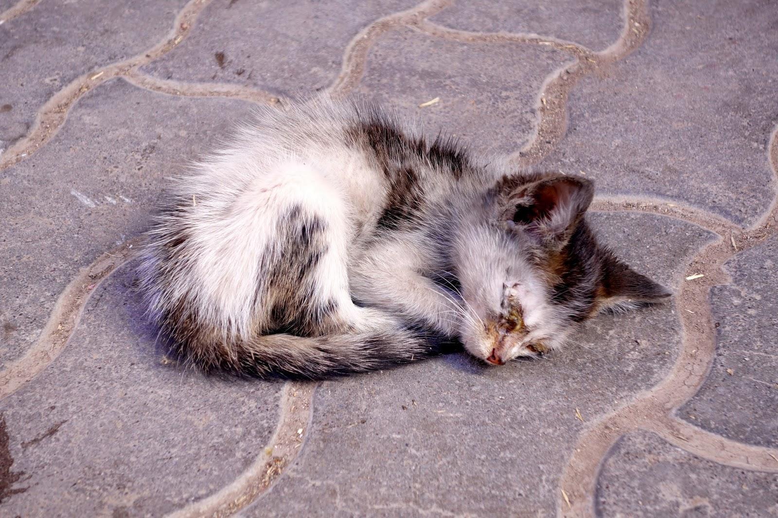 cat hamster ball