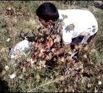 Indian-Boy-Uprooting-Plant